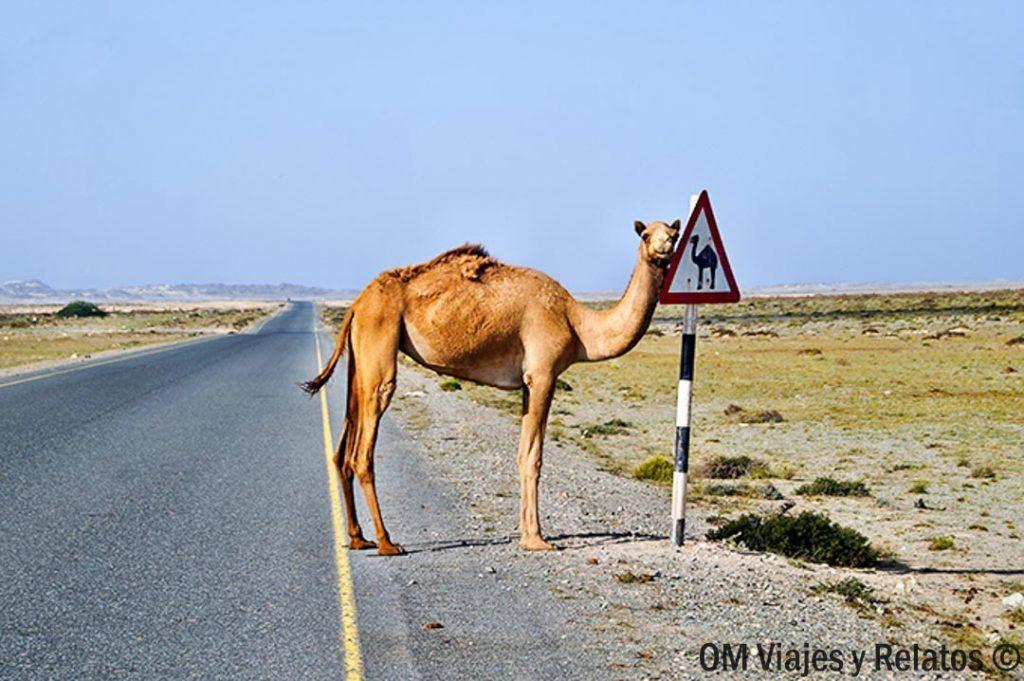 excursión-al-desierto-de-Merzouga