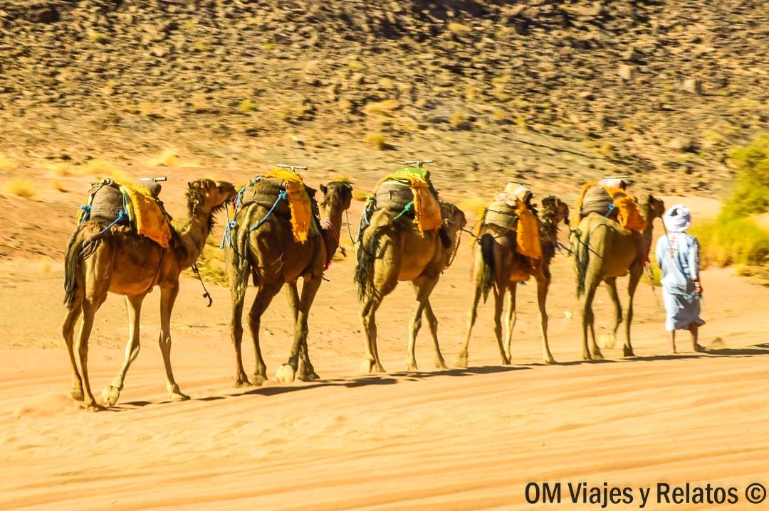 caravanas-camellos-Marruecos