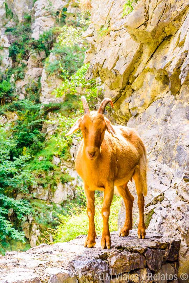 lugares-que-visitar-en-Asturias