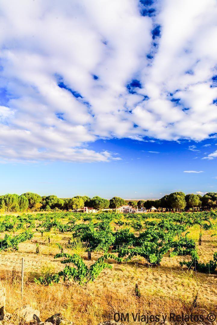 Cata-de-vinos-Madrid