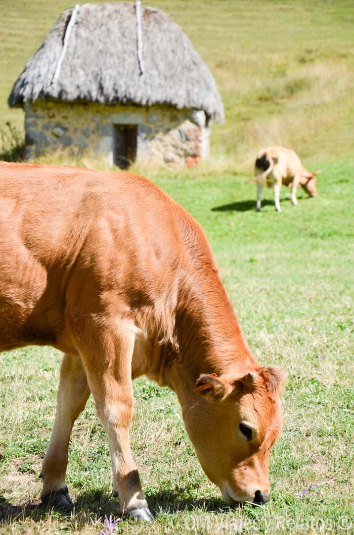 que visitar en asturias y alrededores