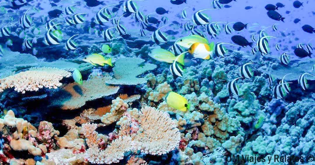 hotel-en-Maldivas-con-arrecifes