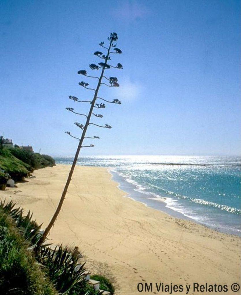 playas-de-Cádiz-Caños-de-Meca