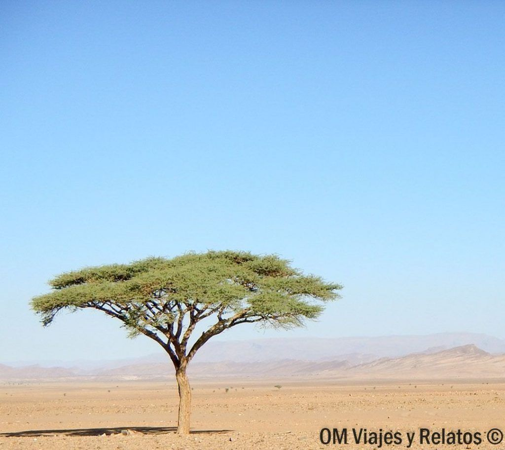 mejores-excursiones-desde-Marrakech-al-desierto-de-Zagora