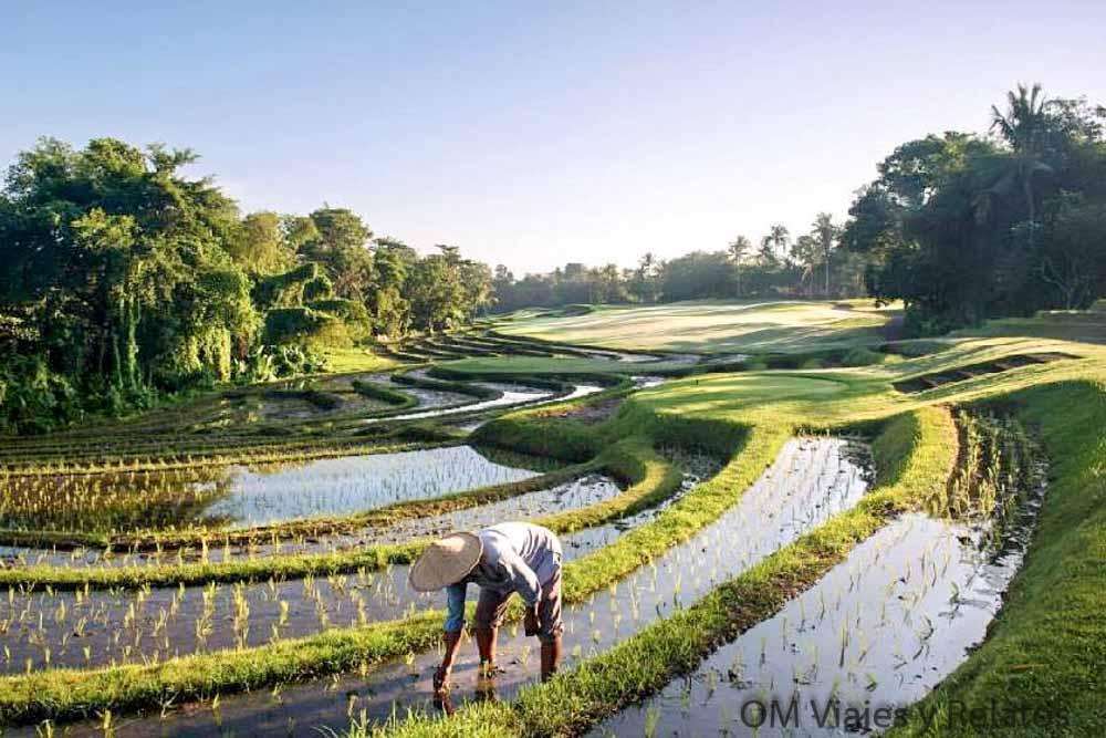 ruta-por-Bali-arrozales