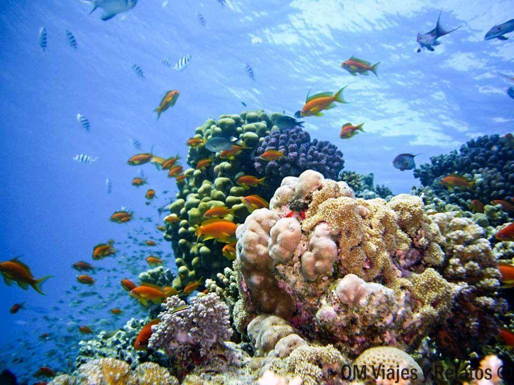cosas-que-hacer-en-Maldivas-snorkel-buceo