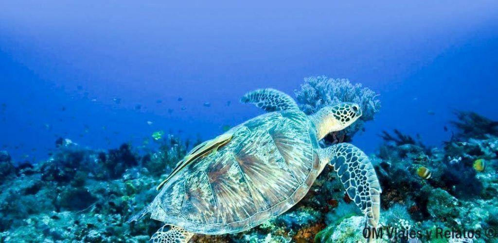 que-visitar-en-Indonesia-en-15-días-islas-Gili
