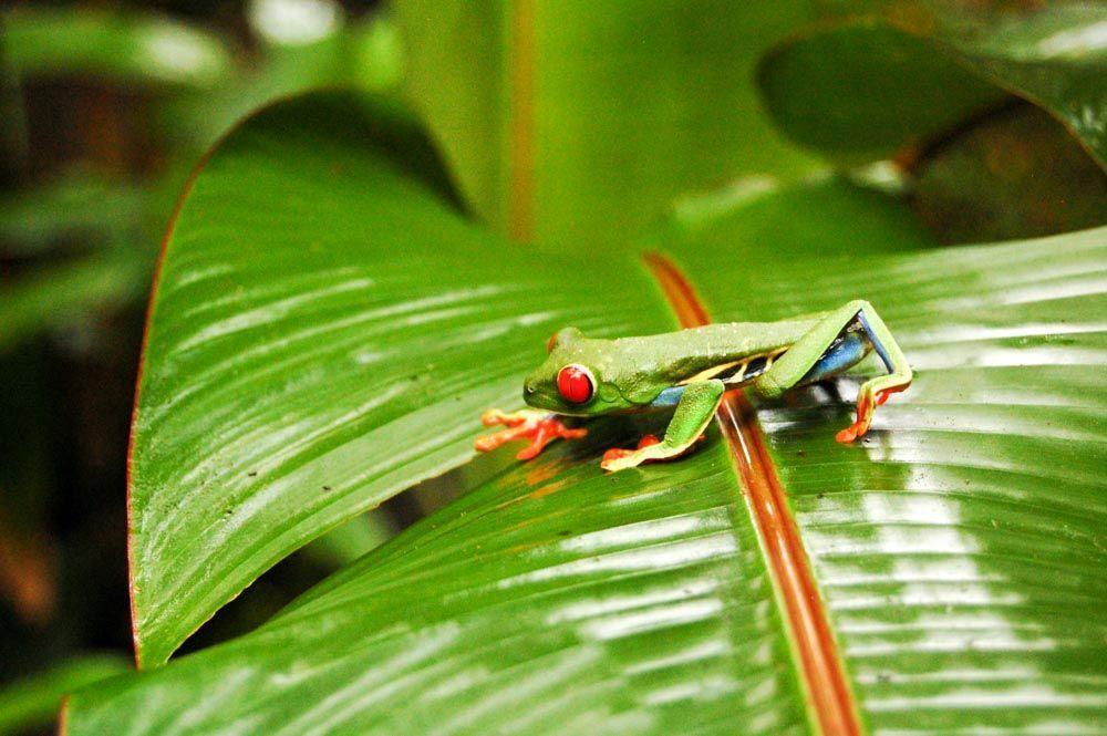 SITIOS-QUE-VISITAR-EN-COSTA-RICA-PARQUES-NATURALES
