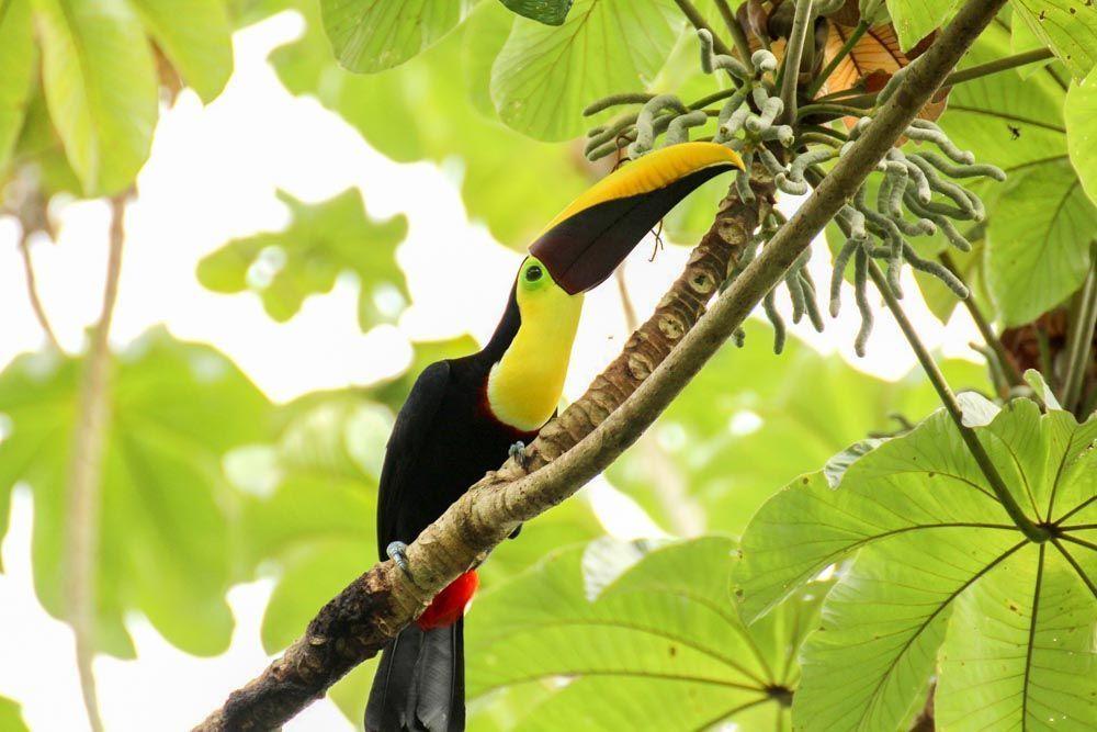 LUGARES-QUE-VISITAR-EN-COSTA-RICA-MANUEL-ANTONIO