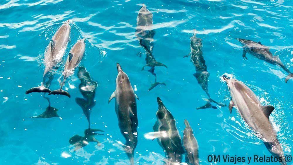 cosas-que-hacer-en-Maldivas-excursiones-Maldivas