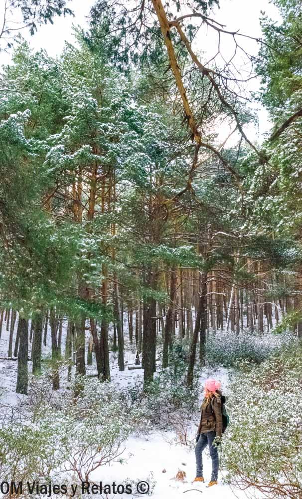 mejores-lugares-donde-ir-a-la-nieve-en-Madrid