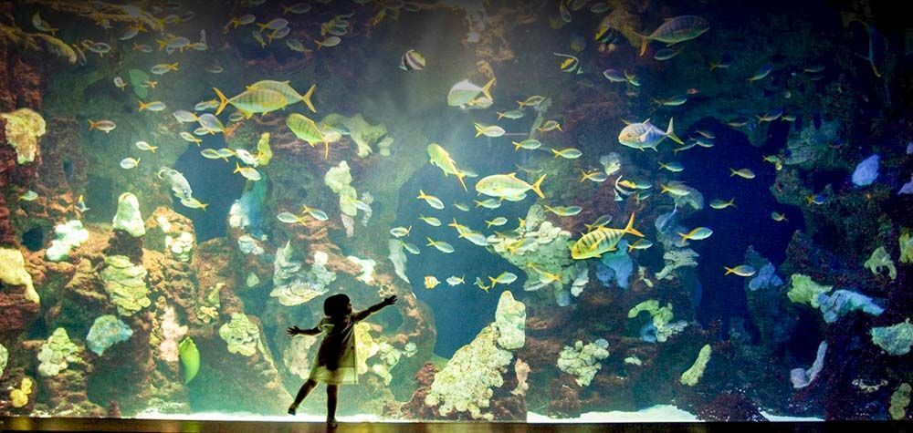 que-hacer-en-San-Sebastián-con-niños-Aquarium